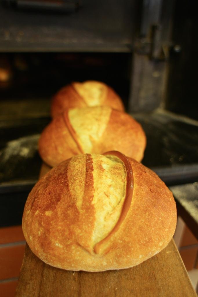 TRABZON EKMEGIi : Eksi maya ile hazirlaniyor, ev ekmegi