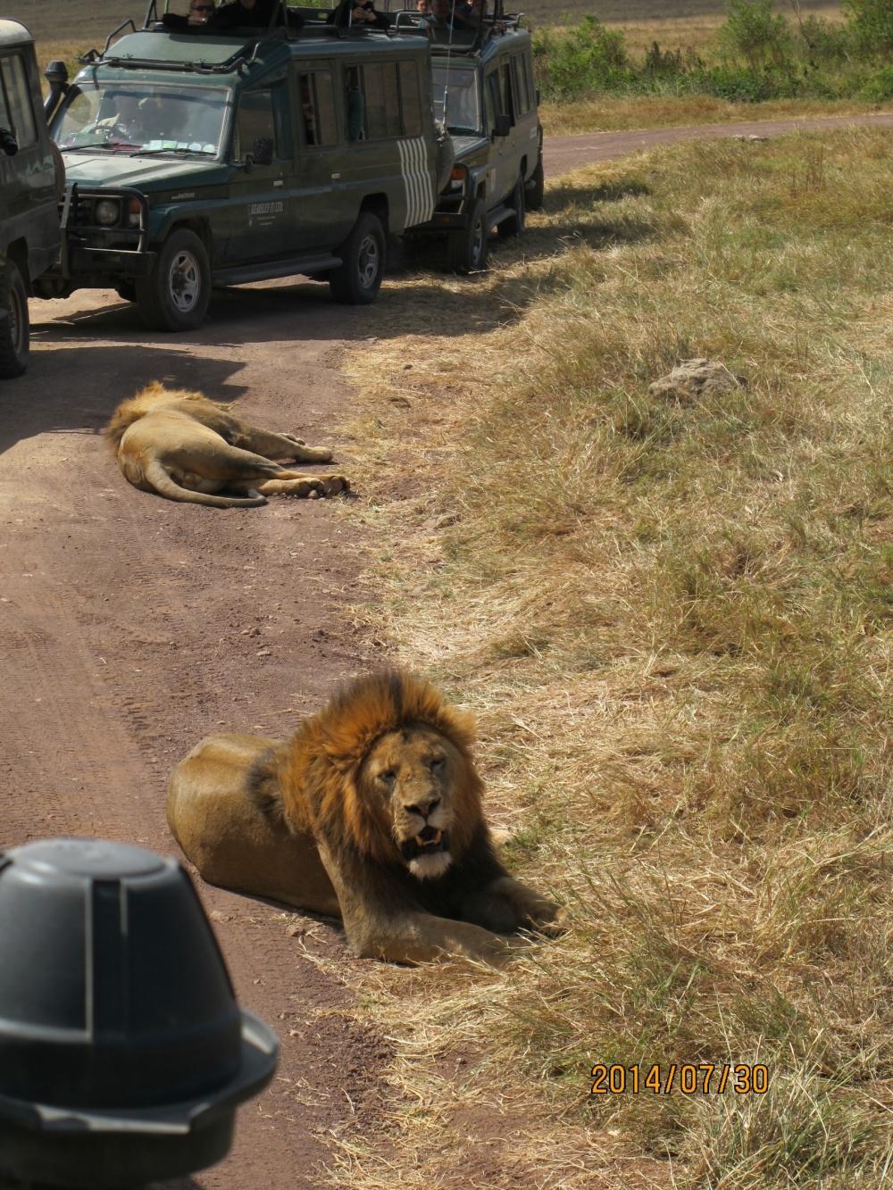 aslanlar2